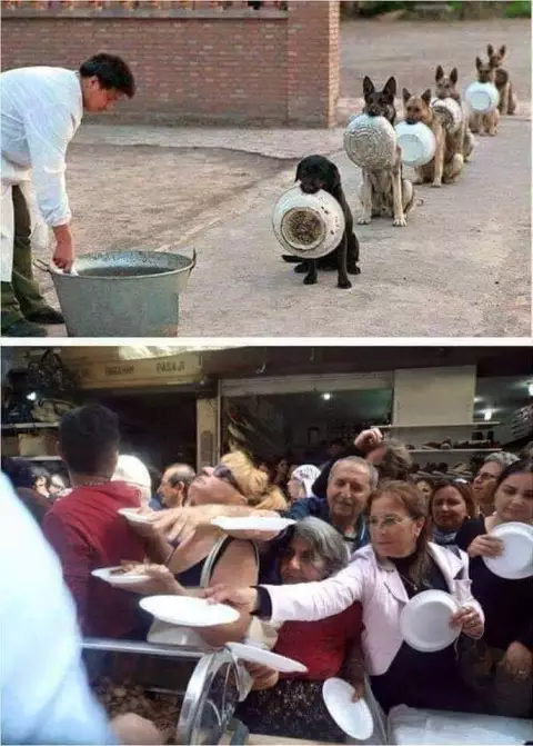 Differences Between Humans & Animals