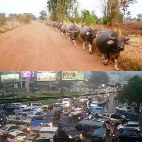 human vs animals