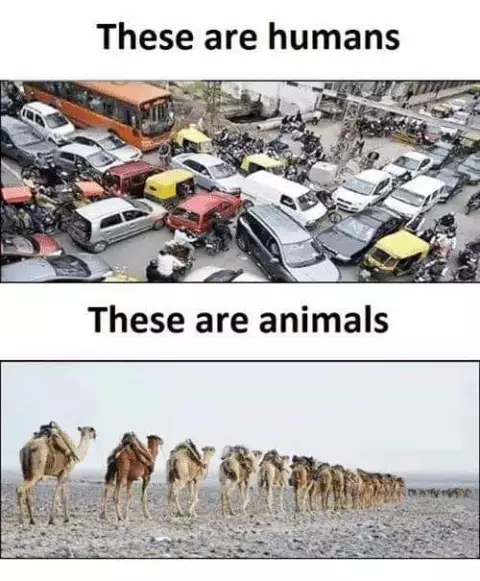 human vs animals